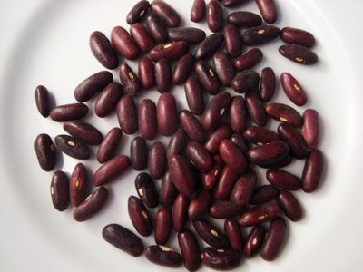Provider Bush Snap Bean 1/4 lb