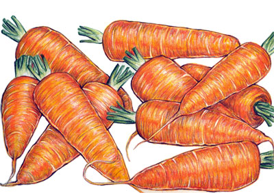 Chantenay Red Core Carrots 28g