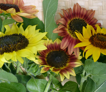 Color Fashion Mix Sunflower 2 g