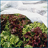 Garden Blanket (Reemay, Floating Row Cover), 50 ft x 67 in