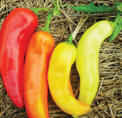 Sweet Banana (Long Sweet Hungarian) Sweet Pepper 3 g
