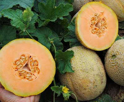 Sweet Passion Muskmelon 2 g