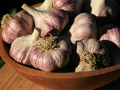 Chesnok Red Hardneck Garlic 8 oz.