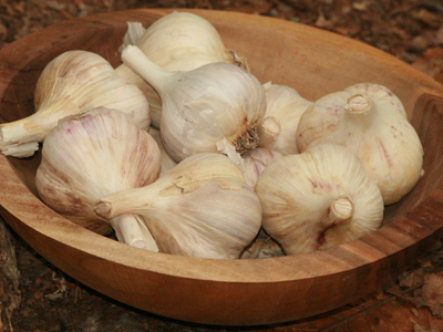 German Porcelain (Northern White) Hardneck Garlic 8 oz.