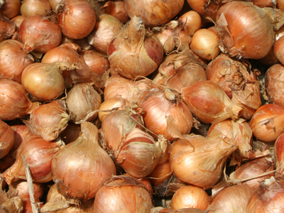 Yellow Potato Onion, bulk size: 20 oz.