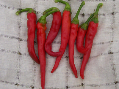 Cayenne, Long Red Hot Pepper 0.3 g