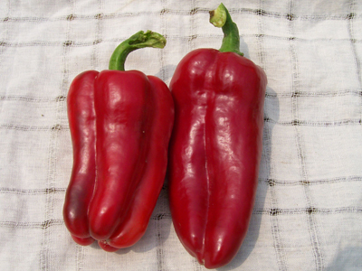 Marconi Sweet Bell Pepper 0.3 g