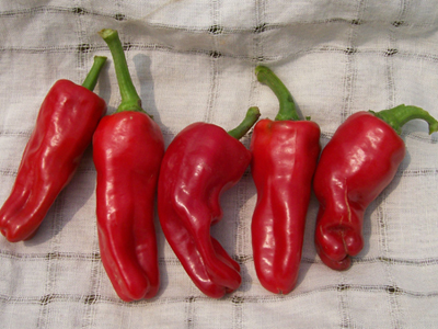 Melrose Sweet Pepper 3 g
