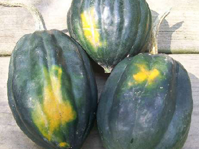 Table Queen Vine (Acorn) Winter Squash 3 g