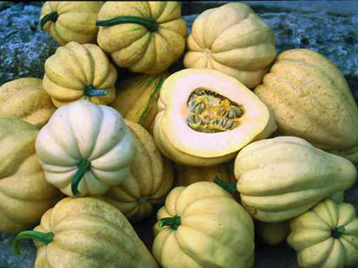 Thelma Sanders Sweet Potato (Acorn) Winter Squash 2 g