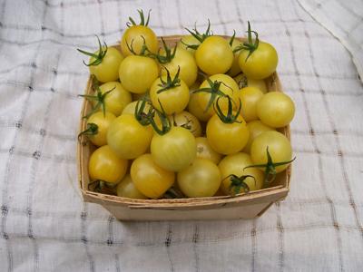 dr. carolyn tomato
