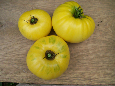 Yellow Mortgage Lifter Tomato 0.16 g
