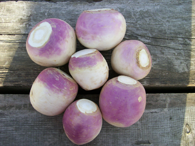 Purple Top White Globe Turnip 28 g