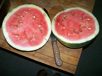 North Star (Planet and Stars) Watermelon 3 g