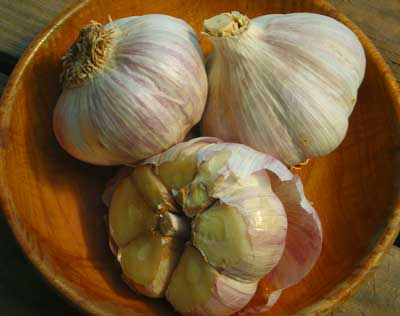 Music Hardneck Garlic 8 oz.