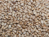Pinto Bean (Soup, Baking, Dry) (Bush), 28 g