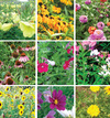 Welcome-to-the-Garden Pollinator Collection