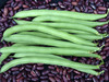 Provider Bush Snap Bean, 28 g
