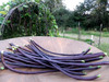 Purple-Podded Asparagus (Yardlong) Bean, 7g