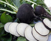 Black Spanish Round Fall Radish, 4 g