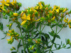 St. Johnswort, 0.05 g