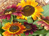 Evening Sun Sunflower, bulk size: 14 g