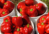 Bull Nose (Large Sweet Spanish) Sweet Bell Pepper, bulk size: 3 g