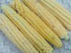 Golden Bantam 8 Row Sweet Corn, 28 g
