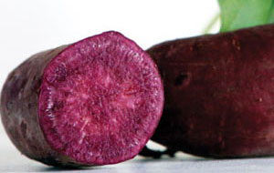 All Purple Sweet Potato