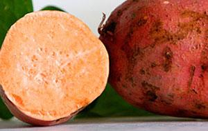 Cómo germinar batatas para plantar - brotes verdes para plantar