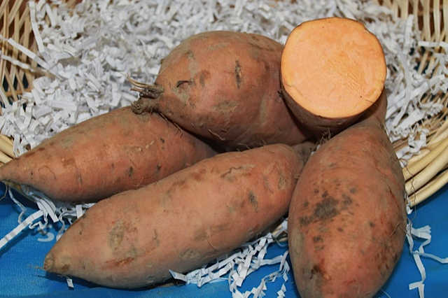 Bunch Porto Rico Sweet Potato 6 Slips