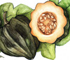 Table Queen Bush (Acorn) Winter Squash 3 g