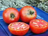 Mountaineer Pride (West Virginia '17A) Tomato 0.16 g
