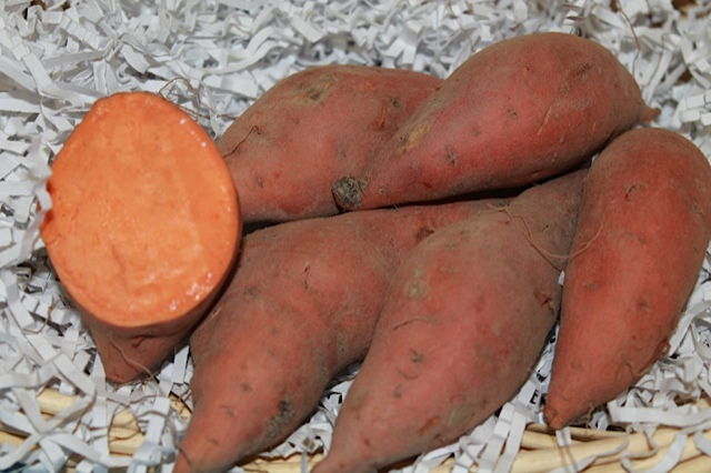Hernandez Sweet Potato, bulk size: 48 slips