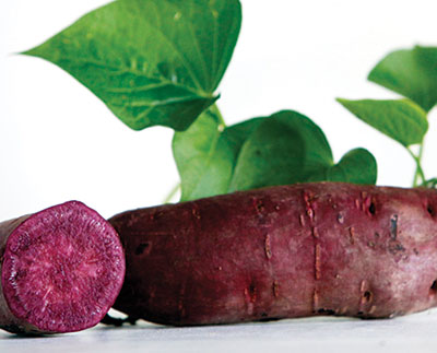 All Purple Sweet Potato 6 Slips