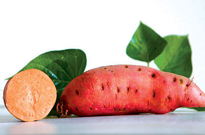 Georgia Jet Sweet Potato, bulk size: 48 slips