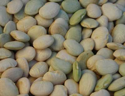 Thorogreen (Cangreen Bush) Bush Lima Bean 28 g