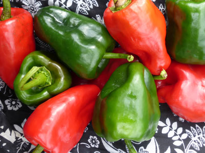 Ancho Poblano Hot Pepper 0.3 g