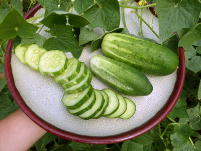 Arkansas Little Leaf Pickling Cucumber 28 g