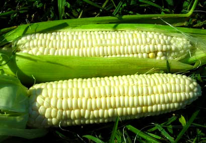 Aunt Mary's Sweet Corn 28g