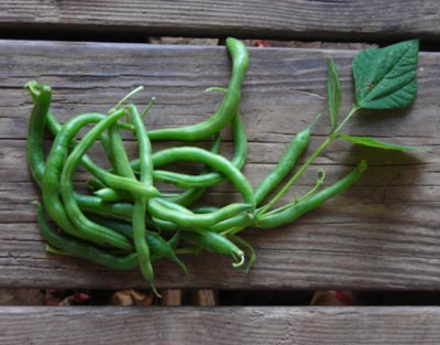 Blue Lake Bush (Blue Lake 274) Bush Snap Bean 1/4 lb