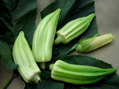 Beck's Big Buck (Snapping Okra) OKRA 5 g