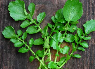 Belle Isle (Upland Cress) - Herb (Greens) 2 g