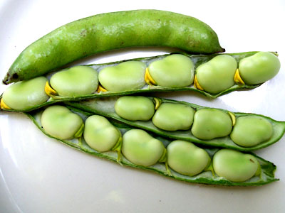 Broad Windsor Fava Bean 1/4 lb