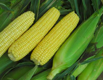 Buhl Sweet Corn 28 g