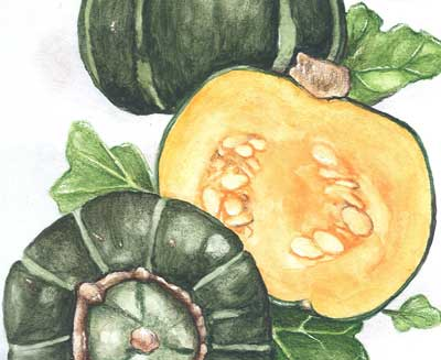 Buttercup, Burgess SQUASH, WINTER 5 g