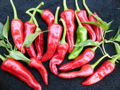 Chimayo Hot Pepper 0.3 g