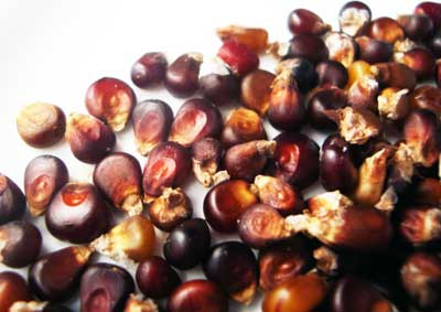 Chocolate Cherry POPCORN 28 g