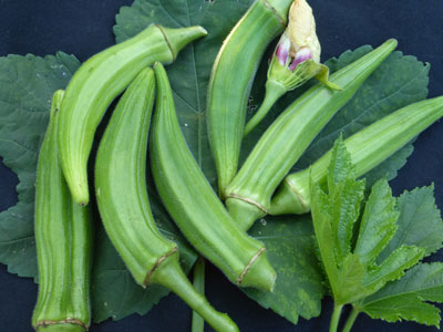 Clemson Spineless Okra 4 g