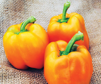 Corona Sweet Bell Pepper 0.3 g